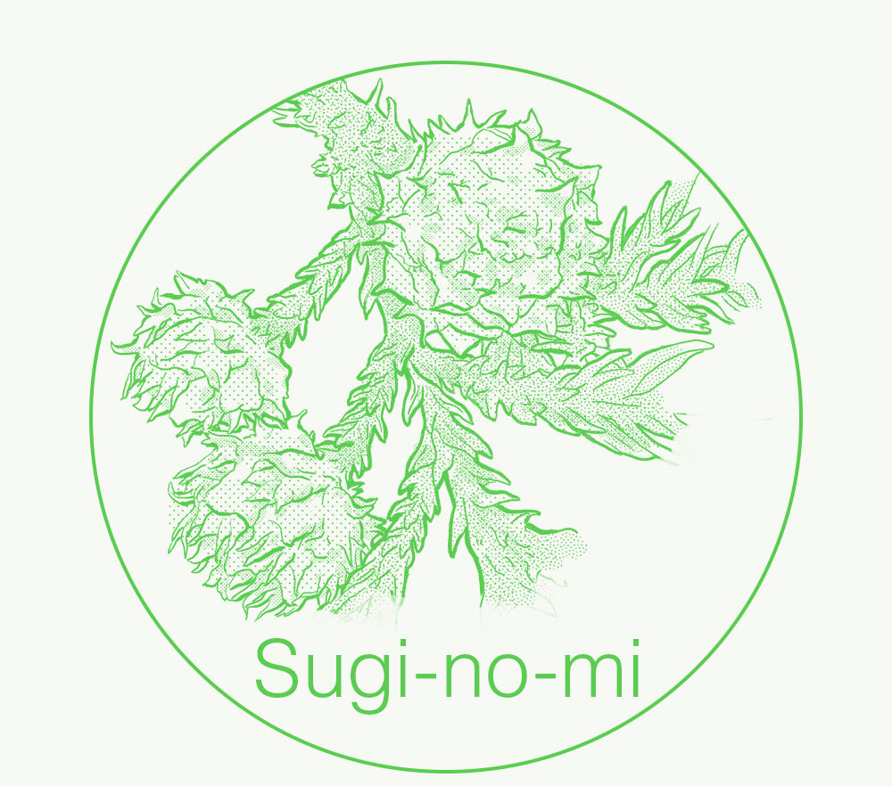Sugi-no-mi(Cedar nut) illustration